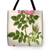 Rose Eglanteria Tote Bag