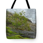 Rose Hip Bush Tote Bag