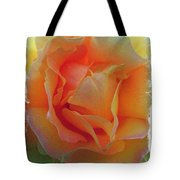 Rose Taken At Sunset  Tote Bag by Daniele Smith