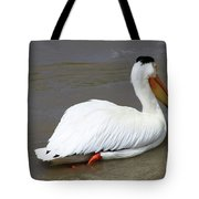 Rough Billed Pelican Tote Bag