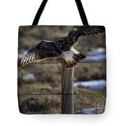 Rough-legged Hawk   #1865 Tote Bag