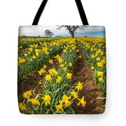 Rows Of Daffodils Tote Bag