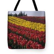 Rows Of Multicolored Tulips In Field Mount Vernon Washington Sta Tote Bag