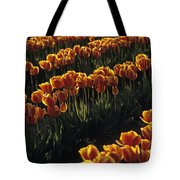 Rows Of Orange Tulips In Field Mount Vernon Washington State Usa Tote Bag
