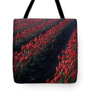 Rows Of Red Tulips Tote Bag