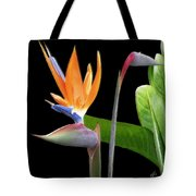 Royal Beauty II - Bird Of Paradise Tote Bag by Ben and Raisa Gertsberg
