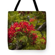 Royal Poinciana Tote Bag