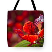 Royal Poinciana - Flamboyant - Delonix Regia Tote Bag
