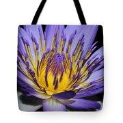Royal Purple Water Lily #5 Tote Bag