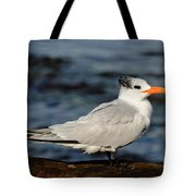 Royal Tern Tote Bag
