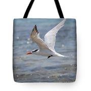 Royal Tern Flight Tote Bag