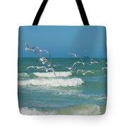 Royal Tern Frenzy Tote Bag by Kim Hojnacki