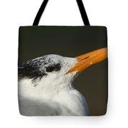 Royal Tern Tote Bag