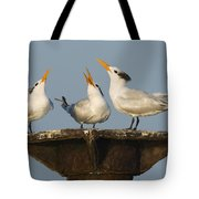 Royal Tern Trio Displaying Dominican Tote Bag