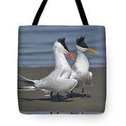 Royal Terns Dancing Tote Bag