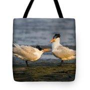 Royal Terns Tote Bag