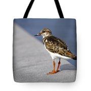 Ruddy Turnstone Bird Arenaria Interpres Florida Usa Tote Bag