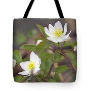 Rue Anemone Wildflower - Pale Pink - Thalictrum Thalictroides Tote Bag