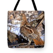 Ruffed Grouse On Alert Tote Bag