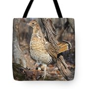 Ruffed Grouse On Mossy Log Tote Bag