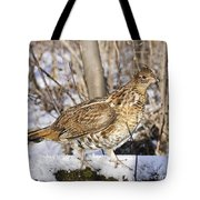 Ruffed Grouse On Snowy Log Tote Bag
