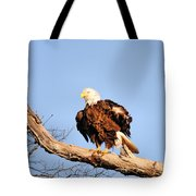 Ruffled Feathers Tote Bag