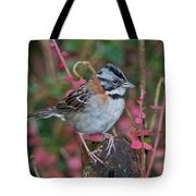 Rufous-collared Sparrow Tote Bag