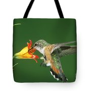 Rufous Hummingbird At Tiger Lily Tote Bag