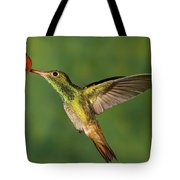 Rufous Hummingbird Feeding Tote Bag