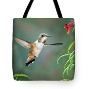 Rufous Hummingbird Female At Monkey Tote Bag