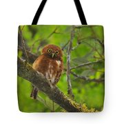 Rufous Morph Costa Rican Pygmy-owl Tote Bag by Tony Beck
