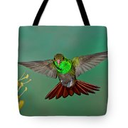 Rufous-tailed Hummer Tote Bag