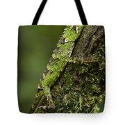 Sabah Eyebrow Lizard Mt Kinabalu Np Tote Bag by Ch'ien Lee