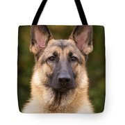 Sable German Shepherd Dog Tote Bag