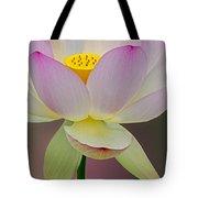 Sacred Lotus Blossom Tote Bag