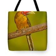 Saffron Toucanet Tote Bag