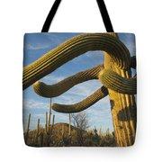 Saguaro Cacti Saguaro Np Arizona Tote Bag
