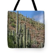 Saguaro Forest In The Superstitions Tote Bag