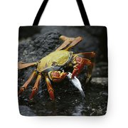 Sally Lightfoot Crab Feeing Galapagos Tote Bag