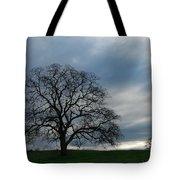 Same Tree Many Skies 10 Tote Bag