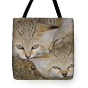 Sand Cat Felis Margarita Tote Bag