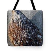 Sand Key Shell Tote Bag
