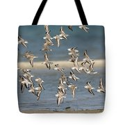 Sanderlings And Dunlins In Flight Tote Bag