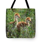 Sandhill Chicks Tote Bag