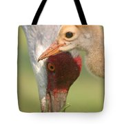 Sandhill Crane And Chick Tote Bag
