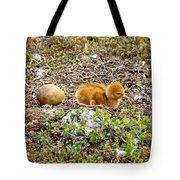 Sandhill Crane Chick Tote Bag