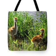 Sandhill Crane Chicks  Tote Bag
