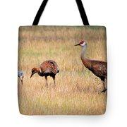 Sandhill Crane Family Tote Bag