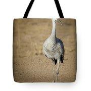 Sandhill Crane In The Spotlight Tote Bag