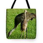 Sandhill Crane With Chick II Tote Bag